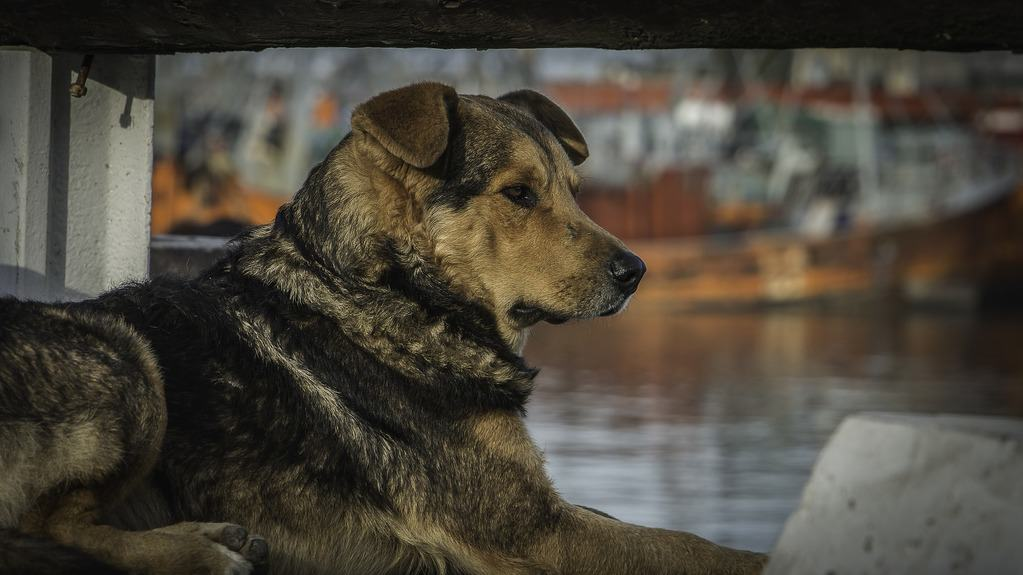 How to get a big dog on a boat