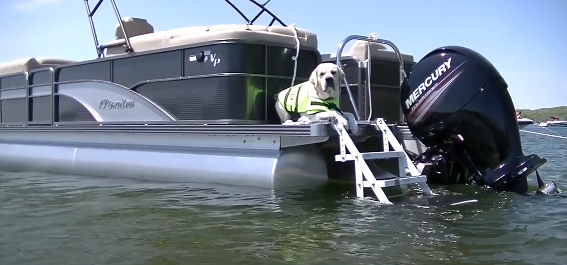 best dog boat ladder