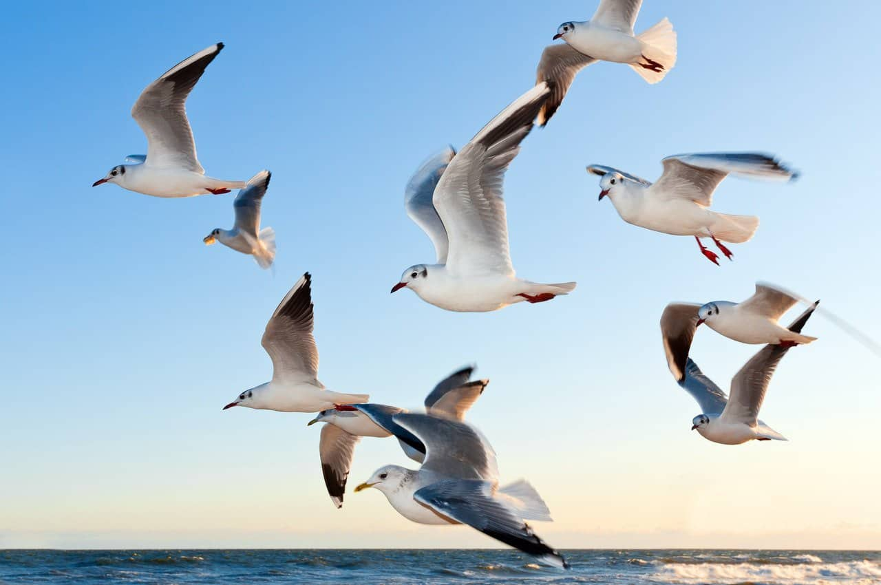 always keep seagulls away from your boat