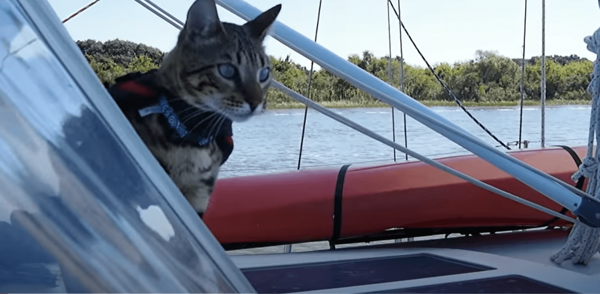 cruising with cats