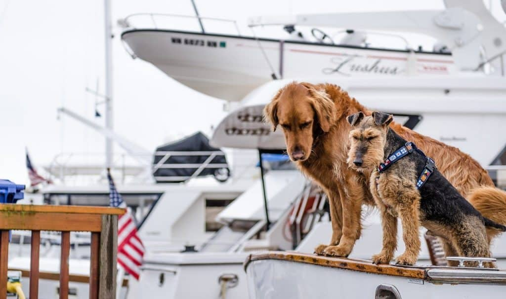 boat names for dog lovers