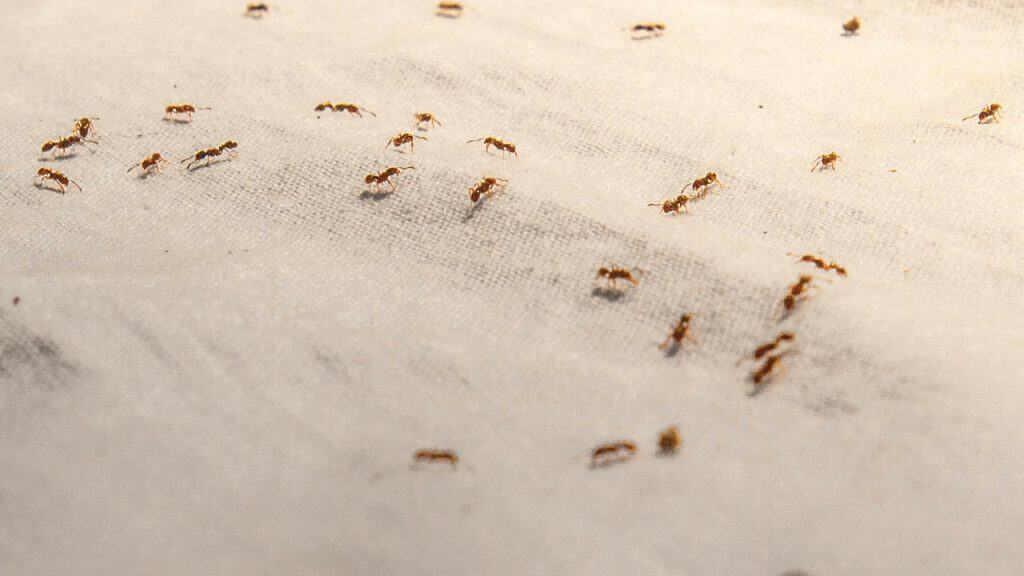 how to get rid of ants on a boat
