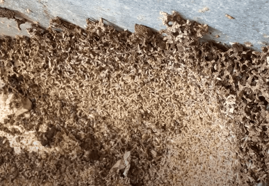 how to get rid of termites on a boat