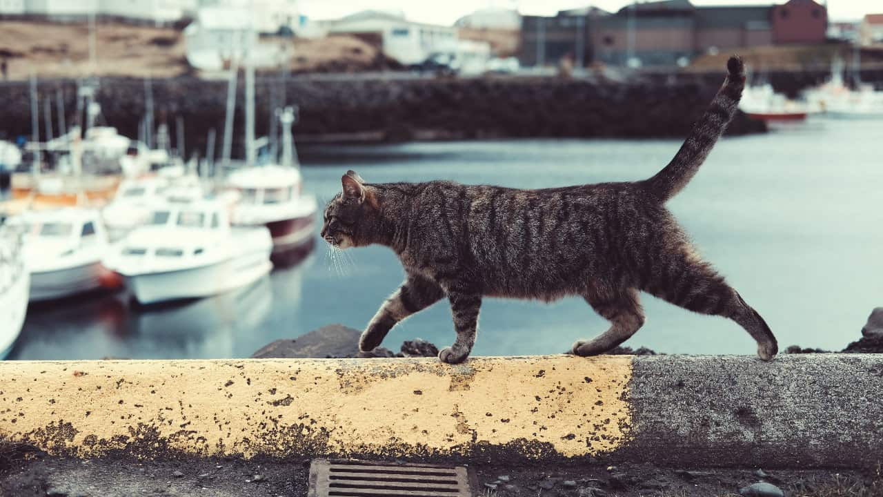 keep a cat around to catch rats and rodents on boats