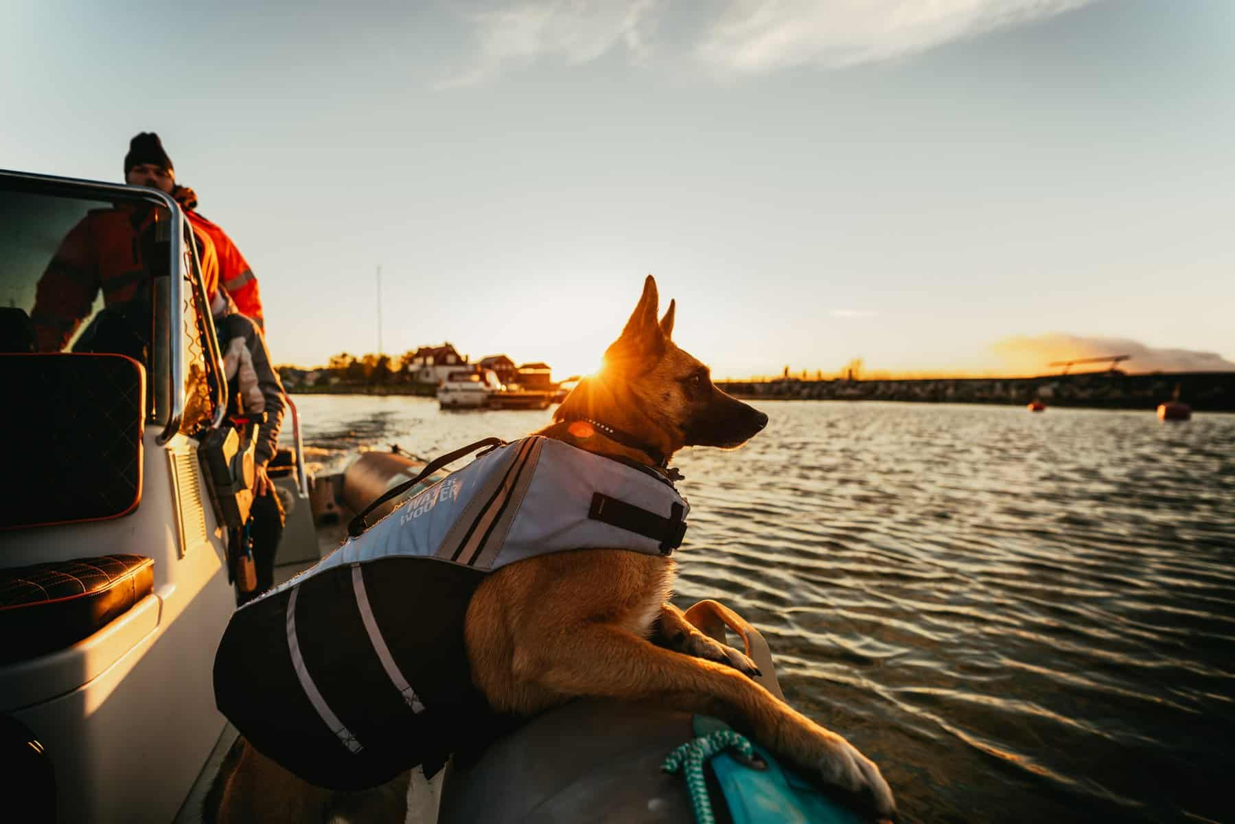 how to keep a dog on a boat