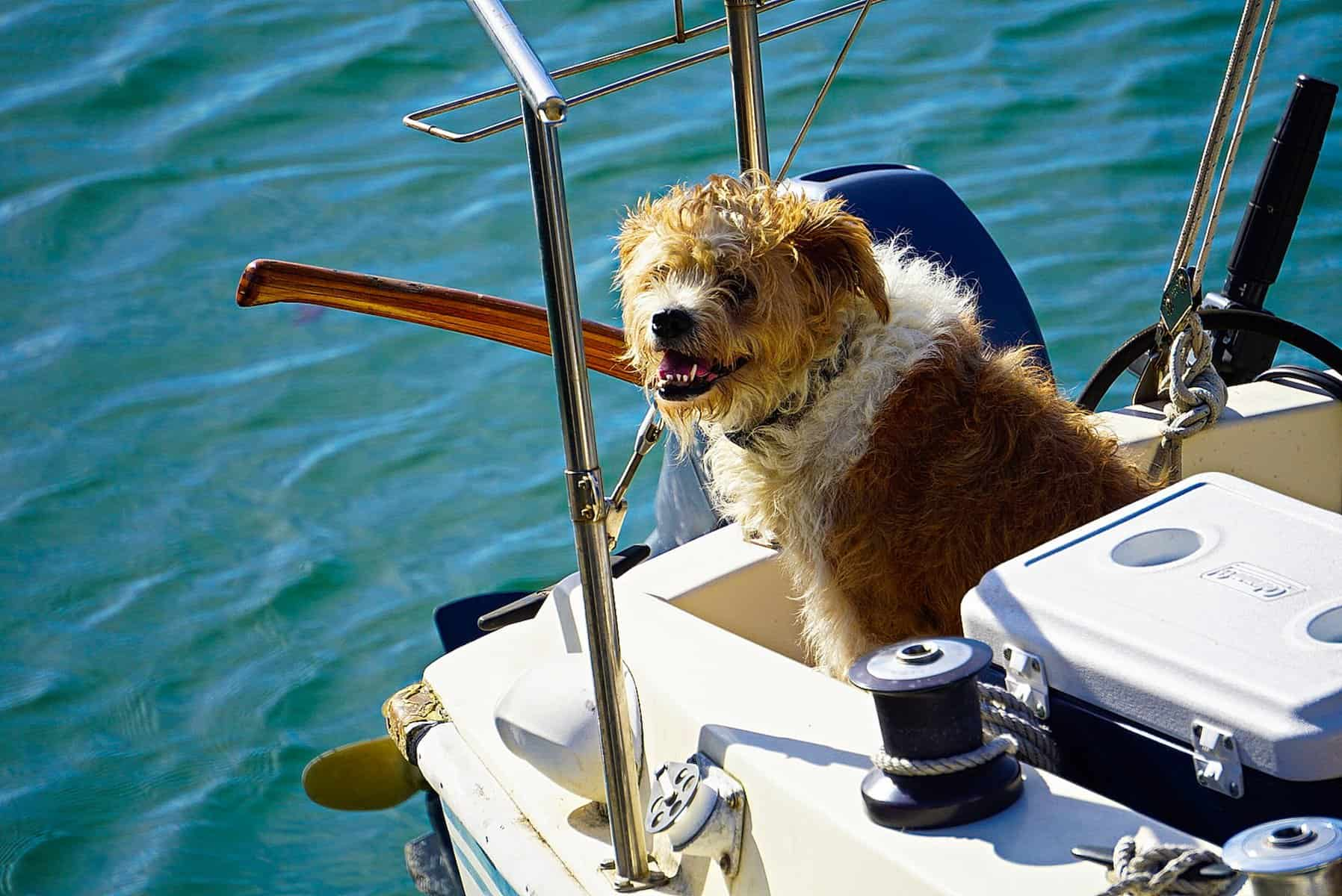 how to travel with a dog on a boat